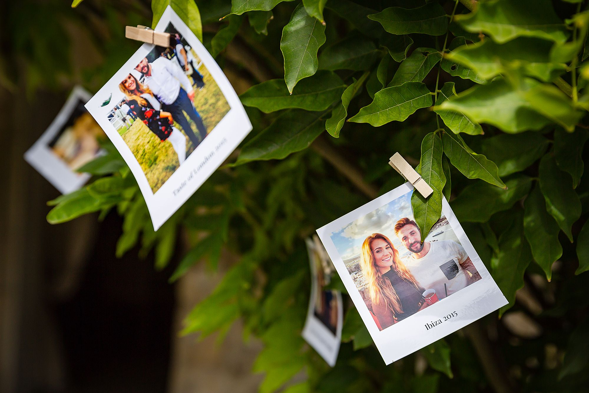 polaroid photos in trees
